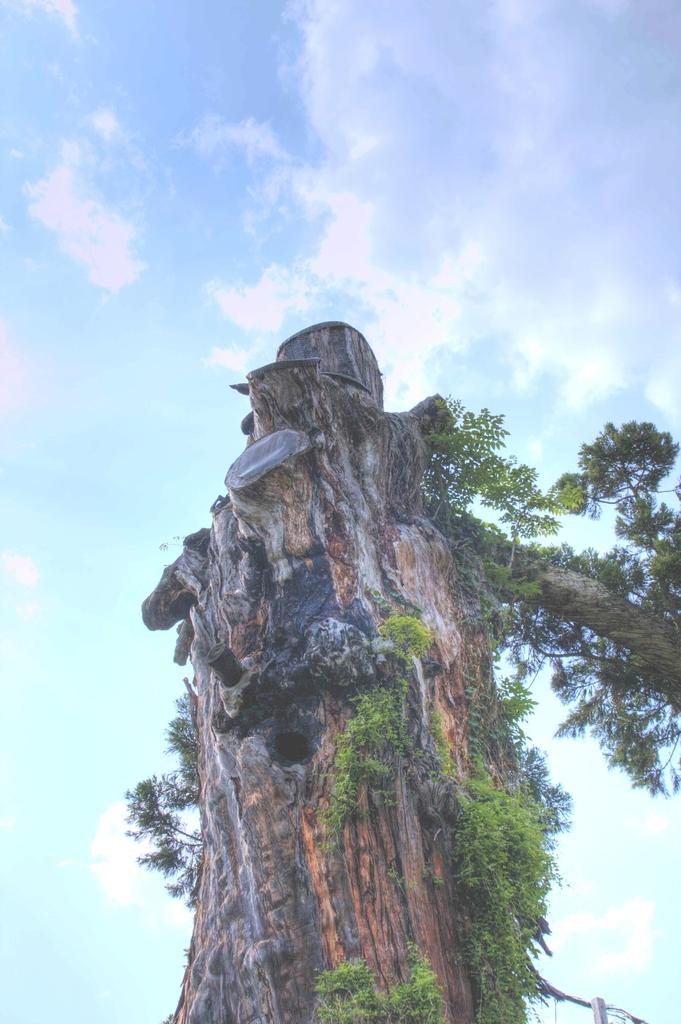樹齢1500年