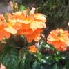 夏のオレンジ