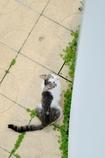 ネコに見られた