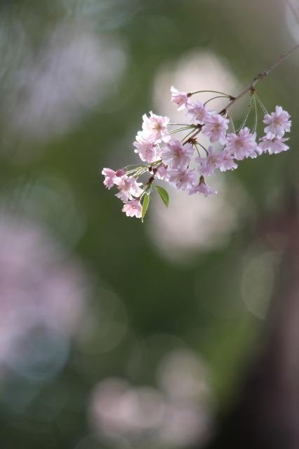 春の瞬き5