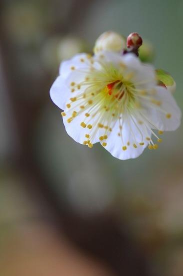 よろこぶ春