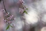 春の瞬き3