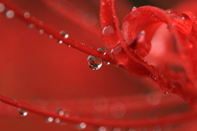 水玉の詩 3