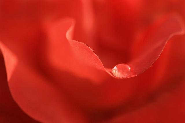 薔薇の宝石
