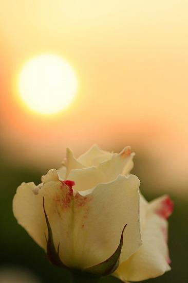 夕陽を浴びて