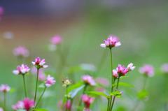 0492 野辺に咲く