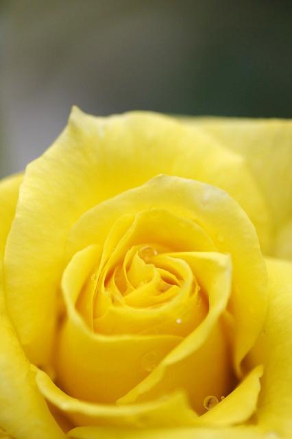 薔薇の回廊 2