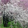 あふれるほどの春
