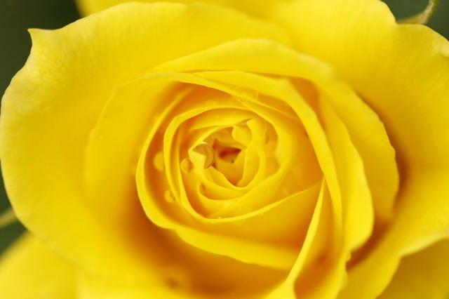 薔薇の回廊 15