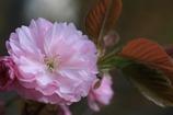 春の瞬き4