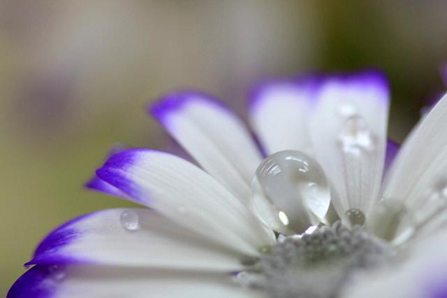 水玉の詩7