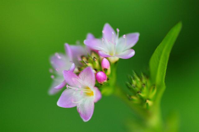 路傍の花  1