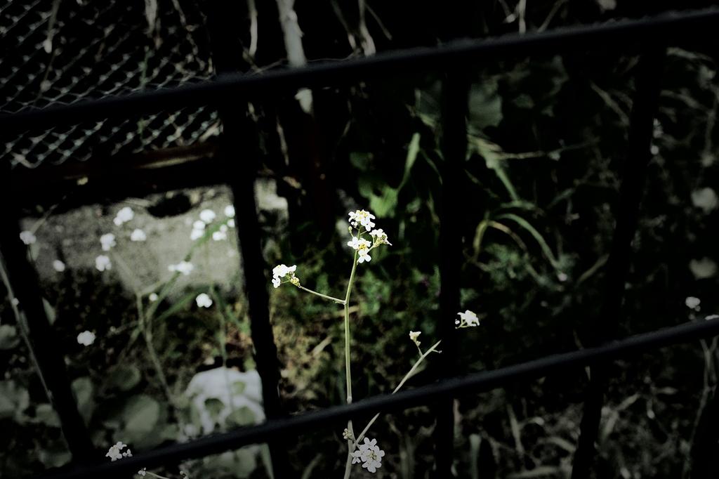 フェンスの中の花