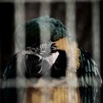 CANON Canon EOS Kiss X2で撮影した動物(オウム)の写真(画像)