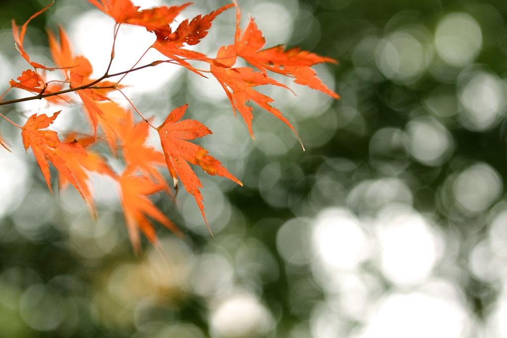 三郎の滝、光紅葉