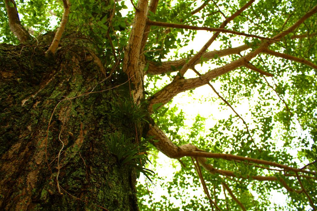 神社の木漏れ日