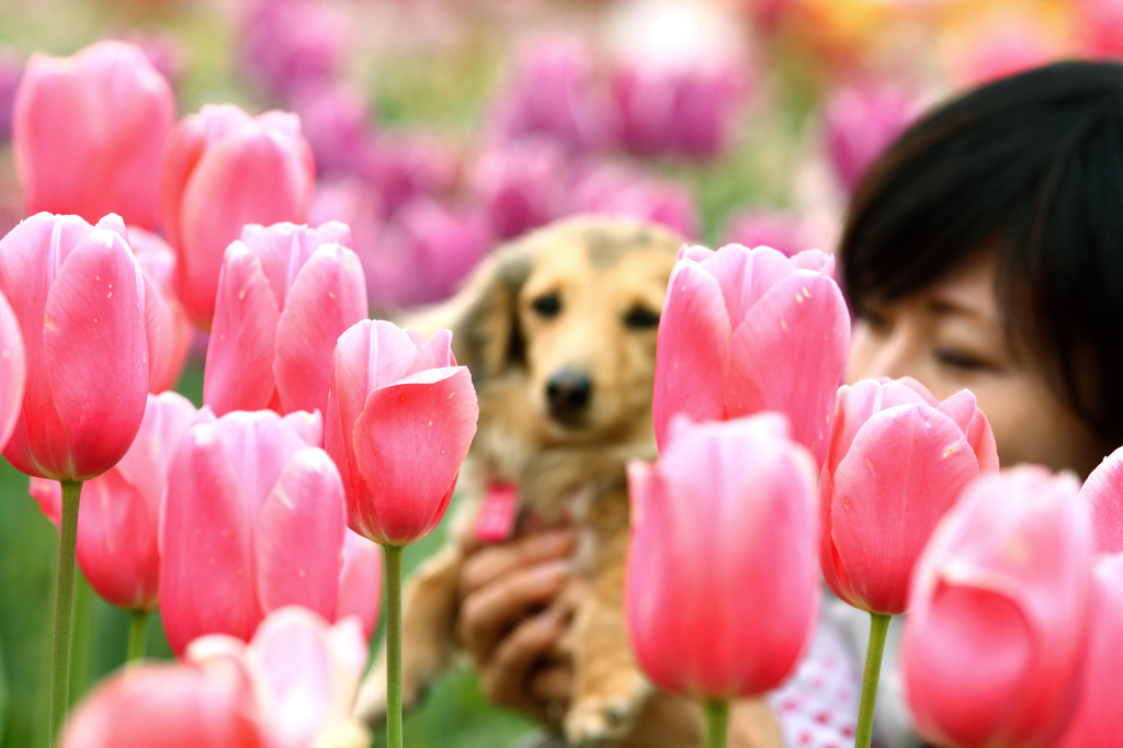 Tulip, dog, and I