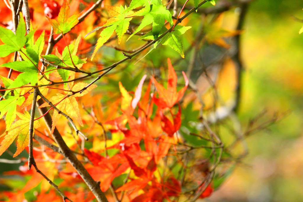 三郎の滝、紅葉にはまだ遠い?2