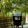 NIKON NIKON D300で撮影した(嵐山)の写真(画像)