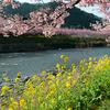 河津川桜並木