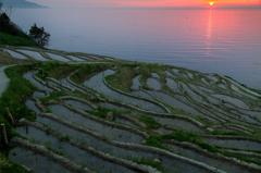 千枚田の夕景