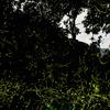 螢の棲む杜へようこそ-其の弐