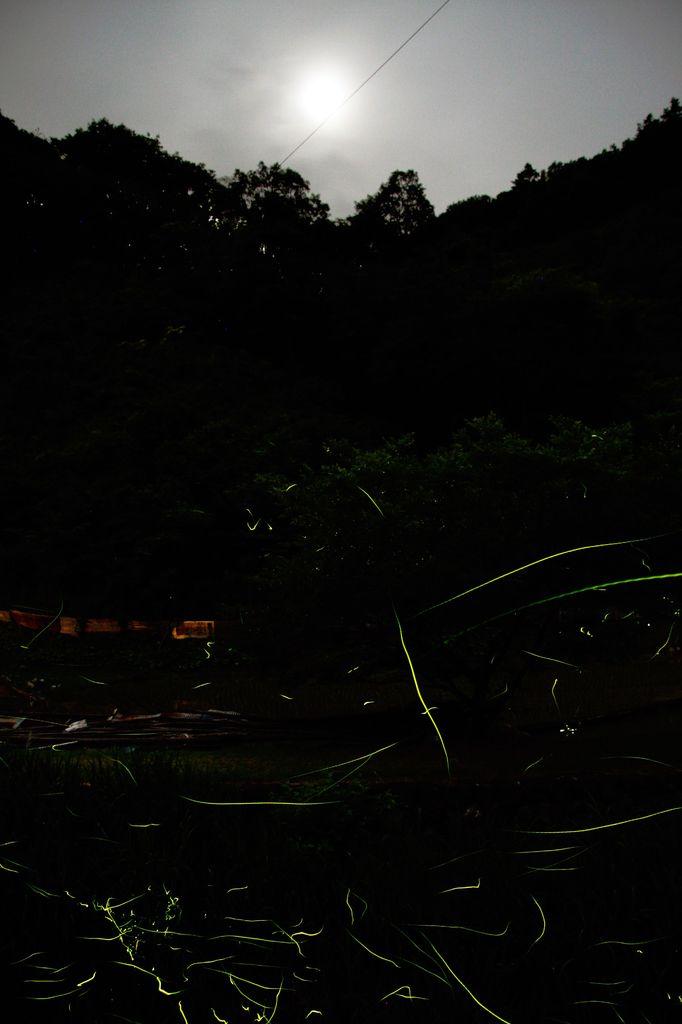 蛍の郷-1