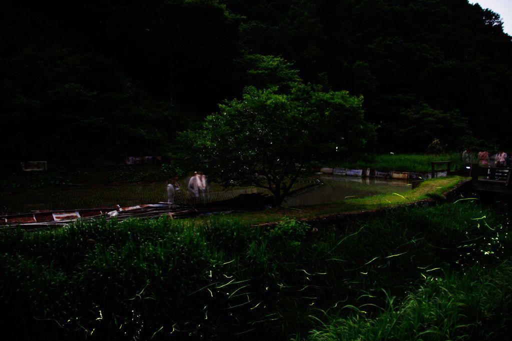 蛍の郷-2
