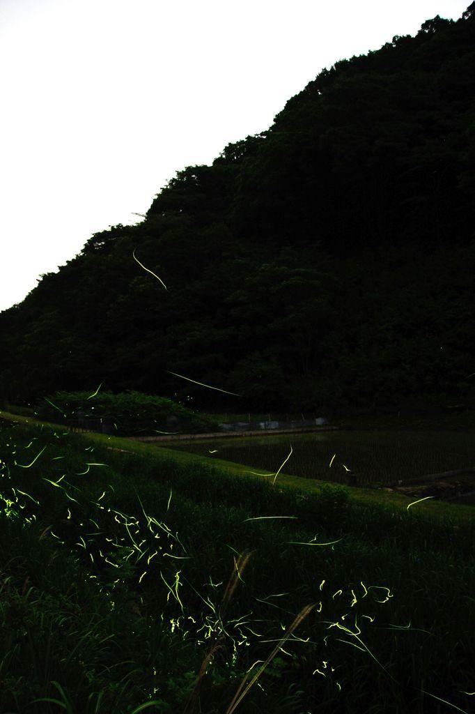蛍の郷-3
