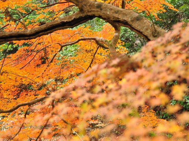 仏通寺の紅葉