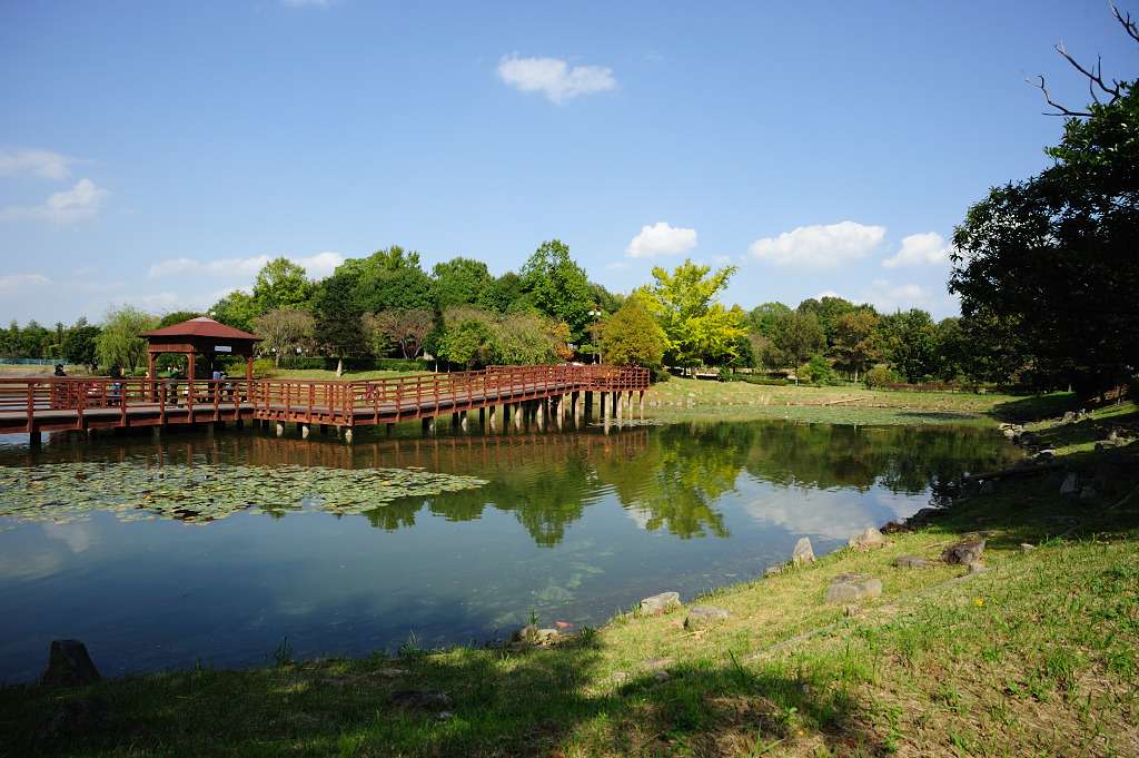 銀杏と池と