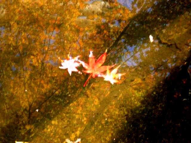紅葉(池1)