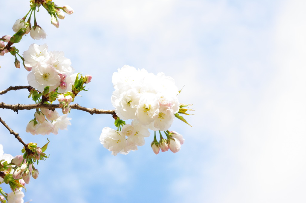 Fly blossom
