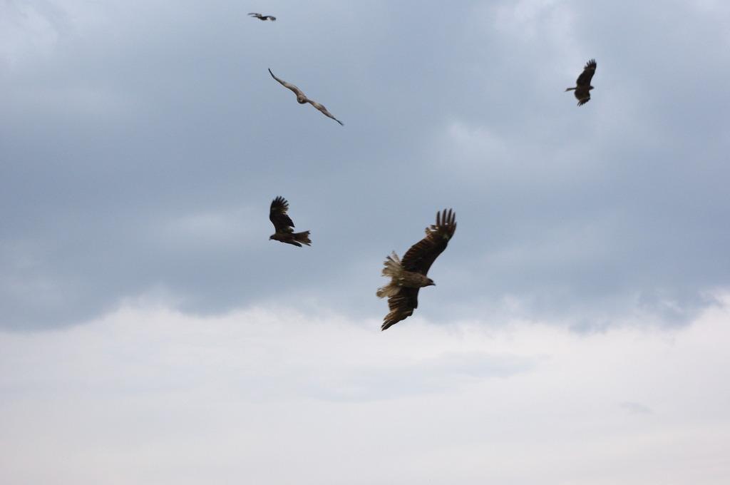 birds scene2
