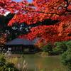 秋映え_09
