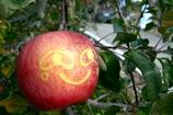 実写版りんごもっこり