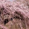 2014年03月23日_新宿御苑