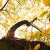 2010年11月_新宿御苑_10