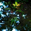 六義園_滝見の茶屋