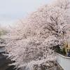 2014年04月05日_神田川