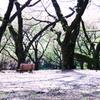 2015年04月12日_新宿御苑