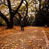 2010年11月_新宿御苑_12