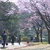 2016年03月21日_新宿御苑