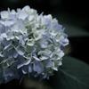 2014年06月01日_新宿御苑