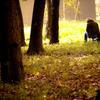 2010年11月_新宿御苑_06