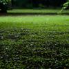 雨の新宿御苑