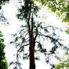 蚕糸の森公園3