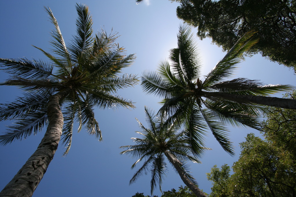 ココナツbaby