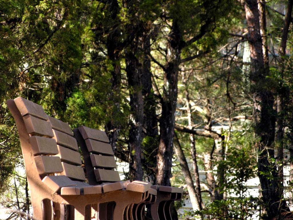 冬の木漏れ日に腰掛けたい
