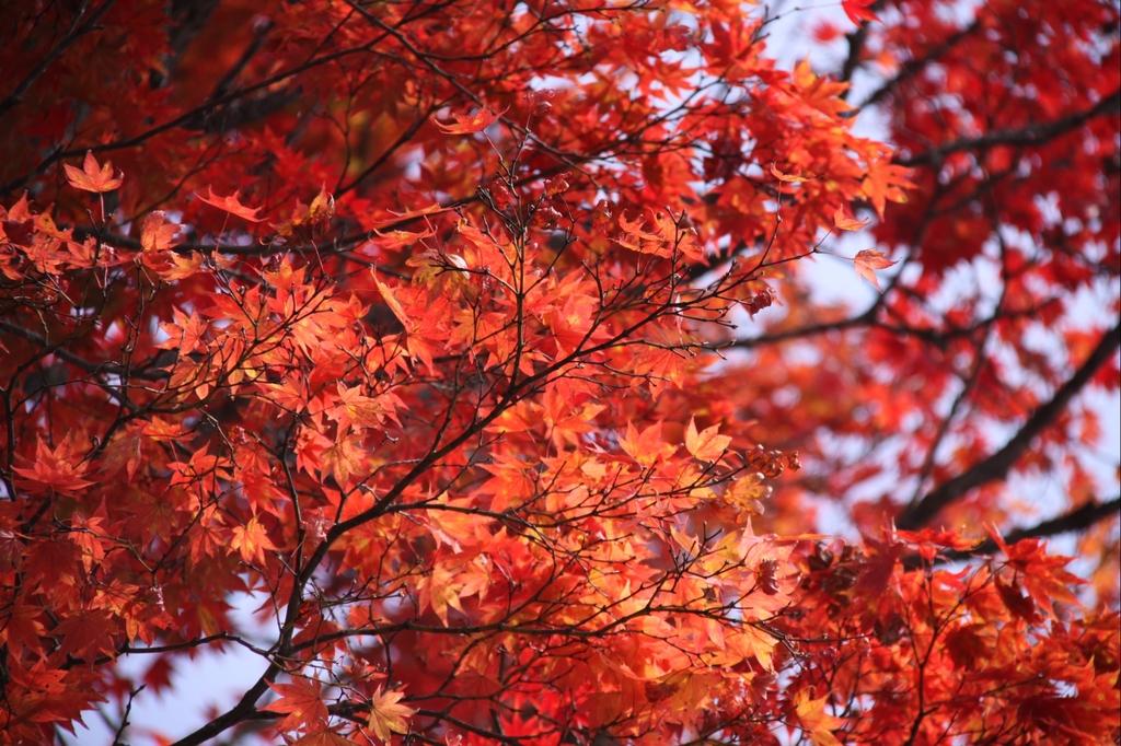 紅葉の日本 - part 2